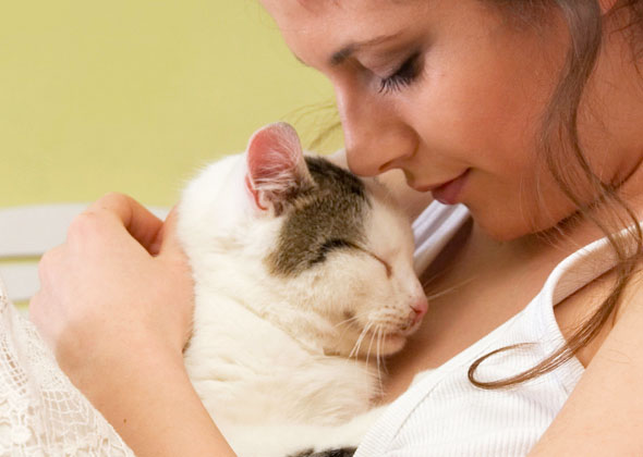 apetfeed keep-your-cat-safe